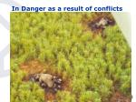 in danger as a result of conflicts12