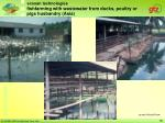 fishfarming with wastewater from ducks poultry or pigs husbandry asia