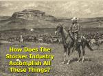 how does the stocker industry accomplish all these things