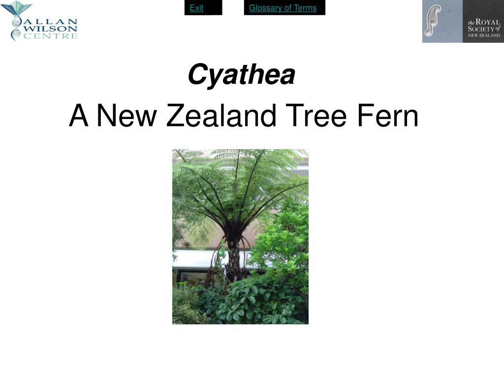 a new zealand tree fern l.