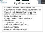 cyatheaceae