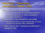 meiofauna macrofauna interactions watzin 198397