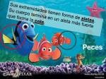 peces26