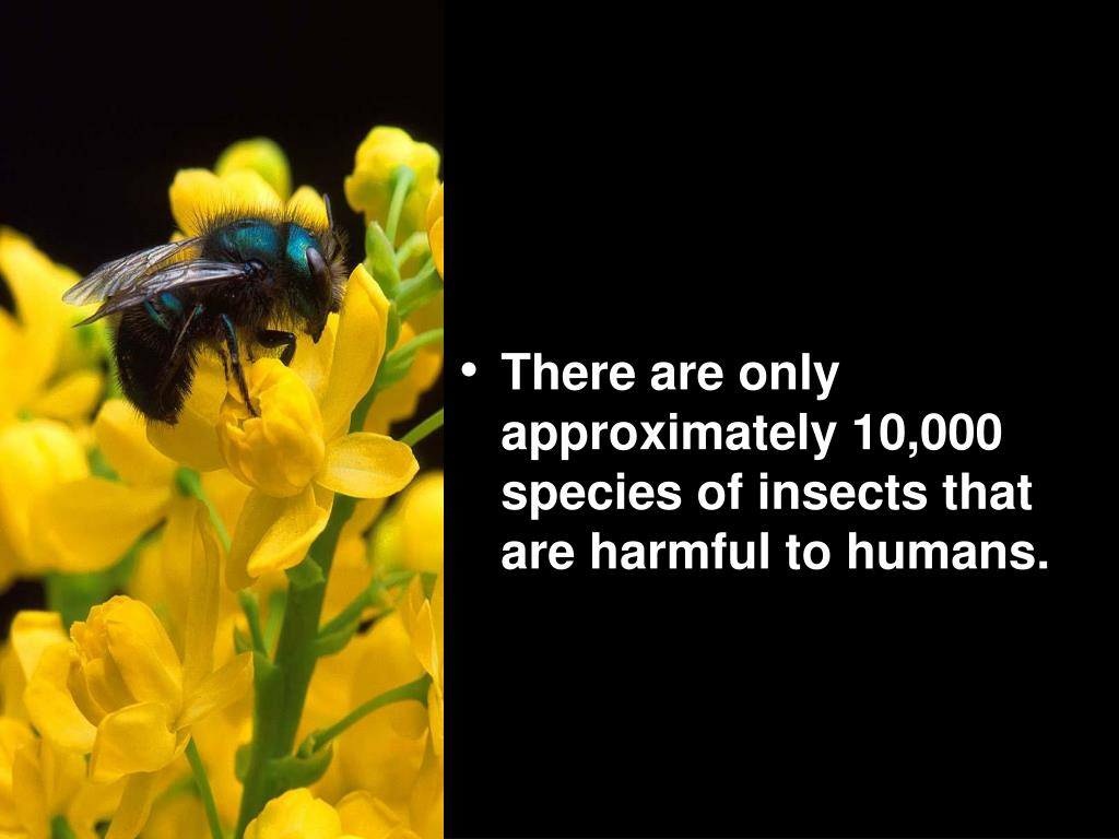 There are only approximately 10,000 species of insects that are harmful to humans.