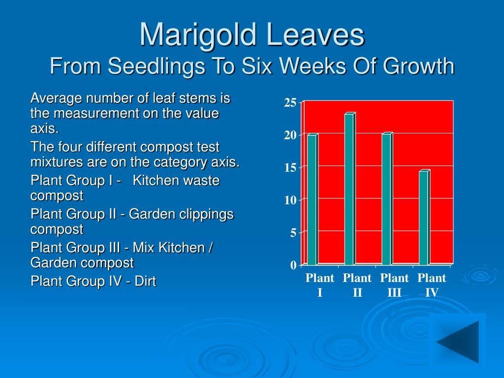 Marigold Leaves
