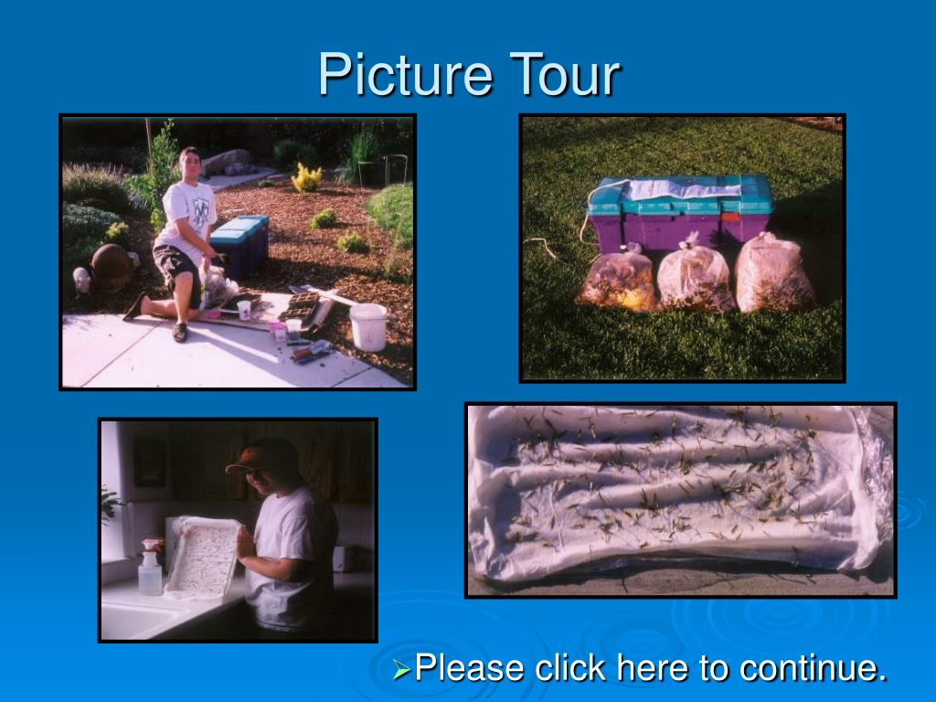 Picture Tour