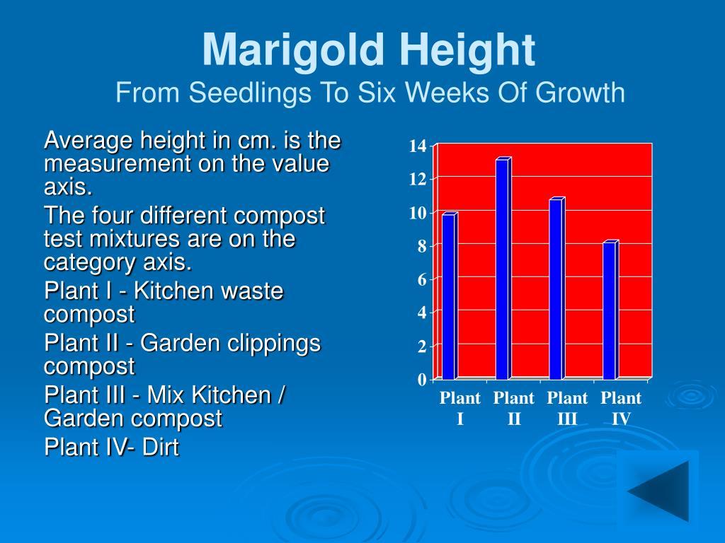 Marigold Height