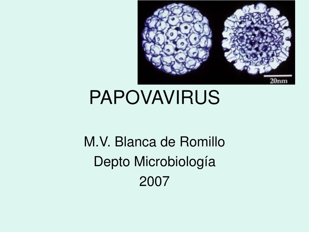 papovavirus l.