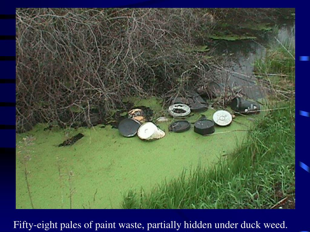 Fifty-eight pales of paint waste, partially hidden under duck weed.