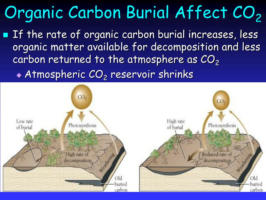 Organic Carbon Burial Affect CO