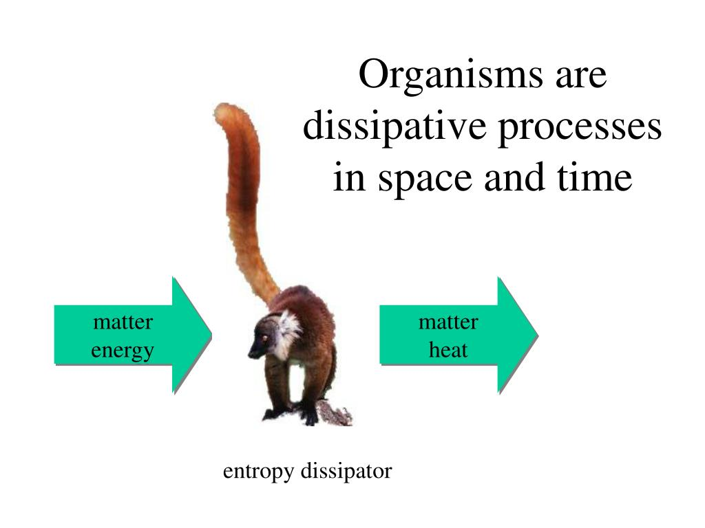 Organisms are