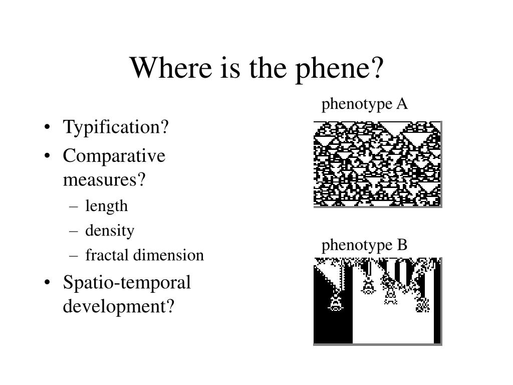 Where is the phene?