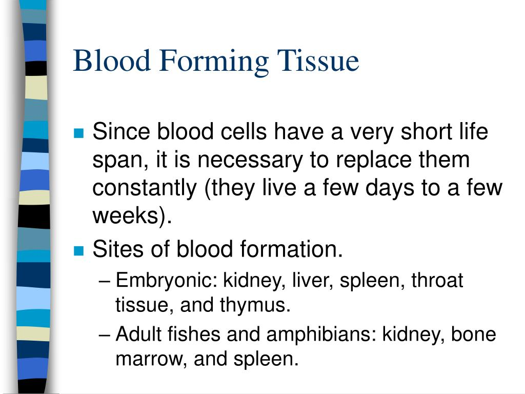 Blood Forming Tissue