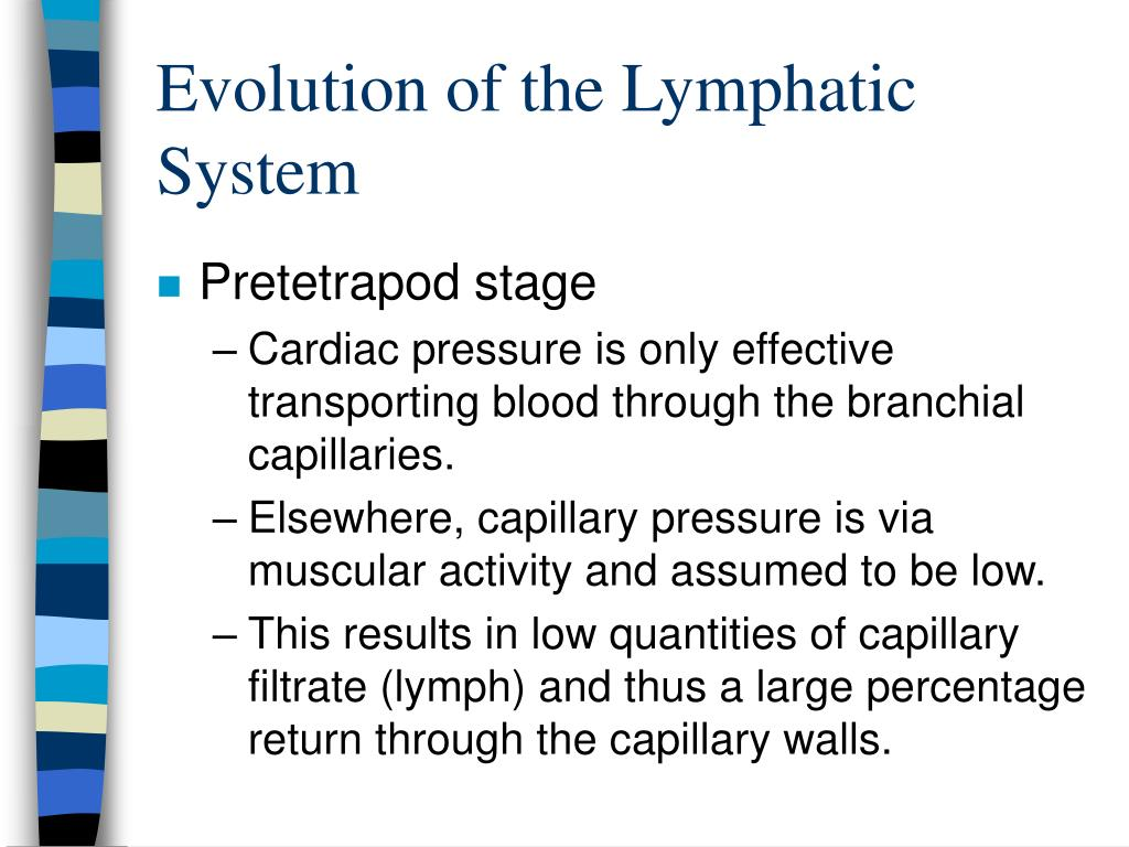 Evolution of the Lymphatic System