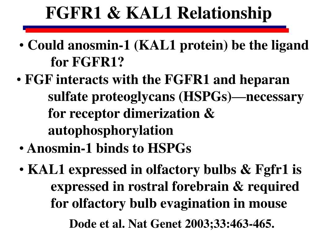 FGFR1 & KAL1 Relationship