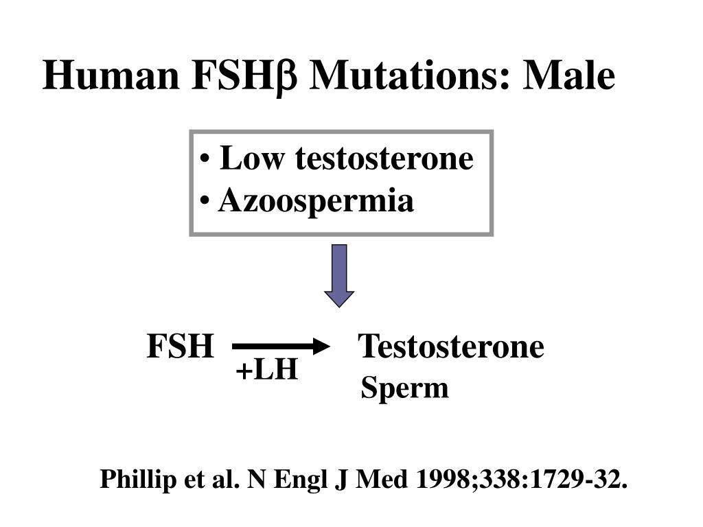 FSH Testosterone