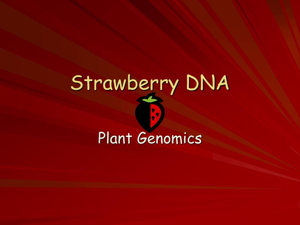 Strawberry DNA