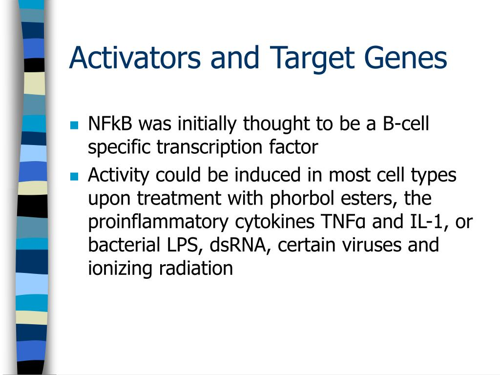 NFkB was initially thought to be a B-cell specific transcription factor