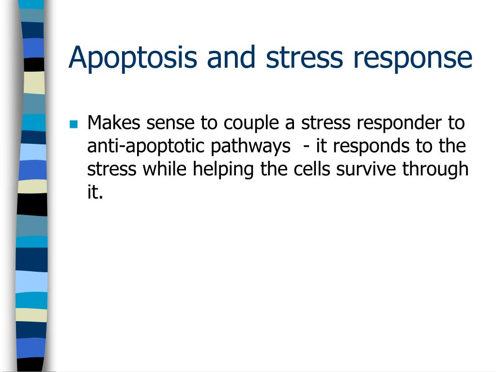 Makes sense to couple a stress responder to anti-apoptotic pathways  - it responds to the stress while helping the cells survive through it.