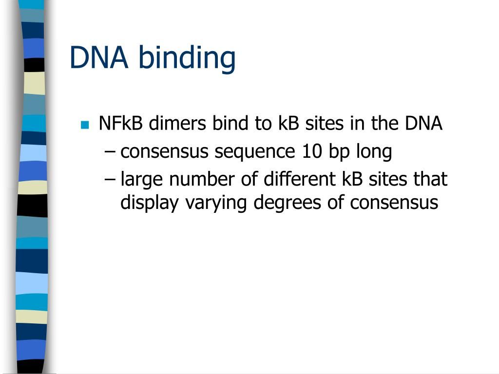 NFkB dimers bind to kB sites in the DNA
