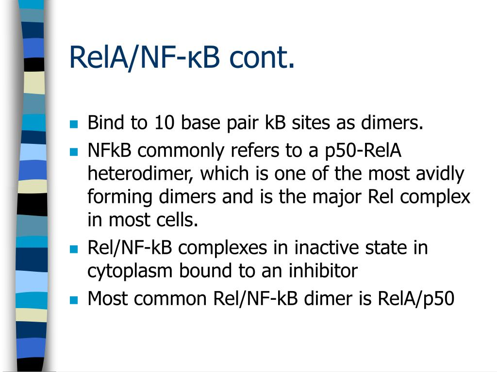 Bind to 10 base pair kB sites as dimers.