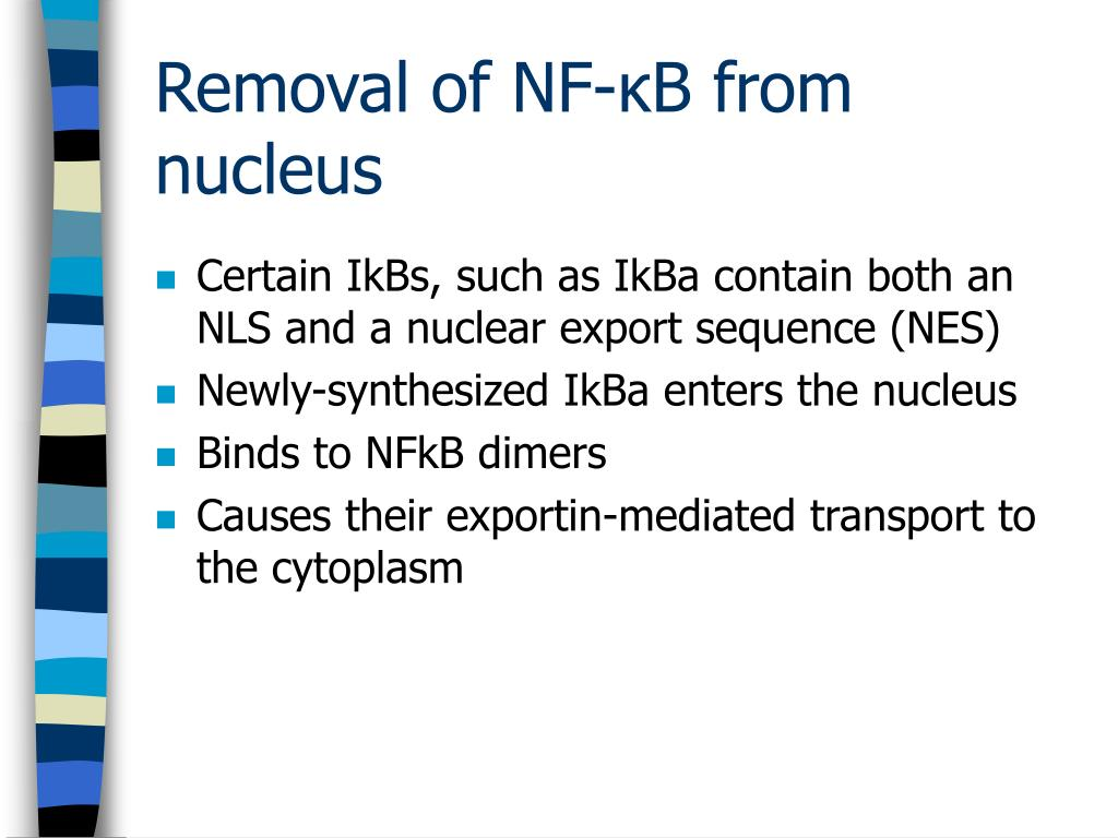 Certain IkBs, such as IkBa contain both an NLS and a nuclear export sequence (NES)