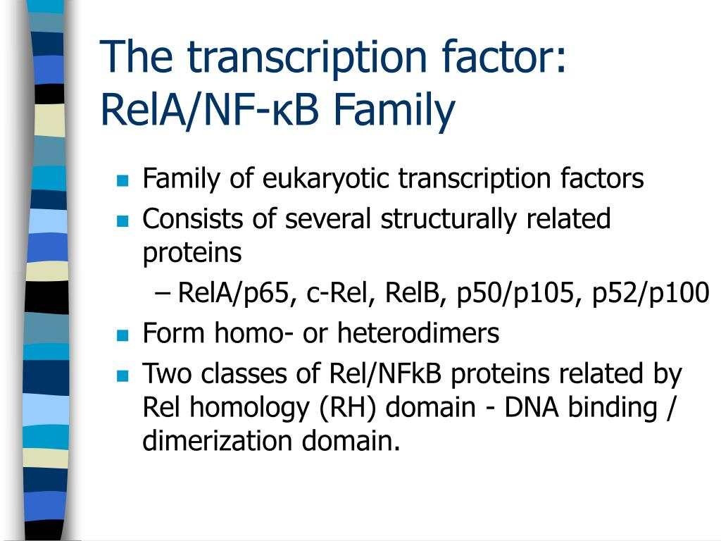 Family of eukaryotic transcription factors