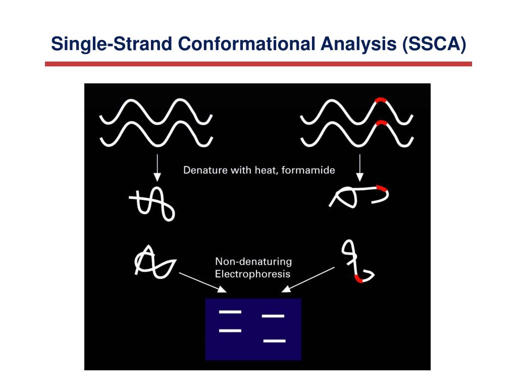 Single-Strand Conformational Analysis (SSCA)