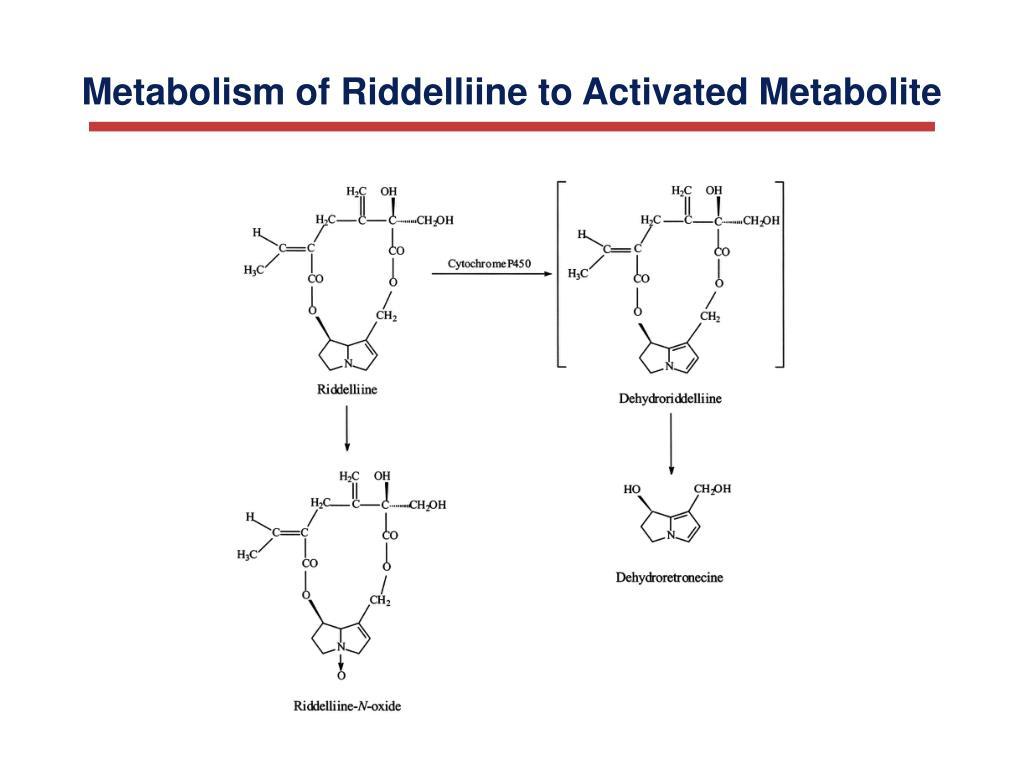 Metabolism of Riddelliine to Activated Metabolite