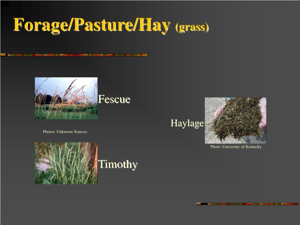 Forage/Pasture/Hay