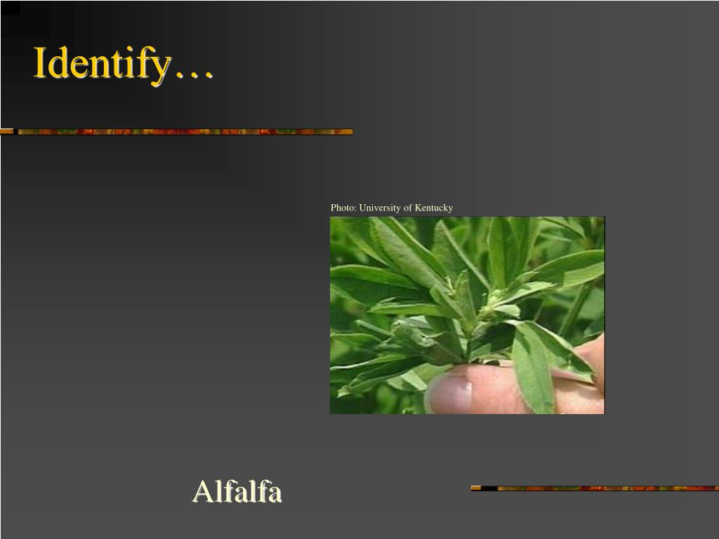 Identify…
