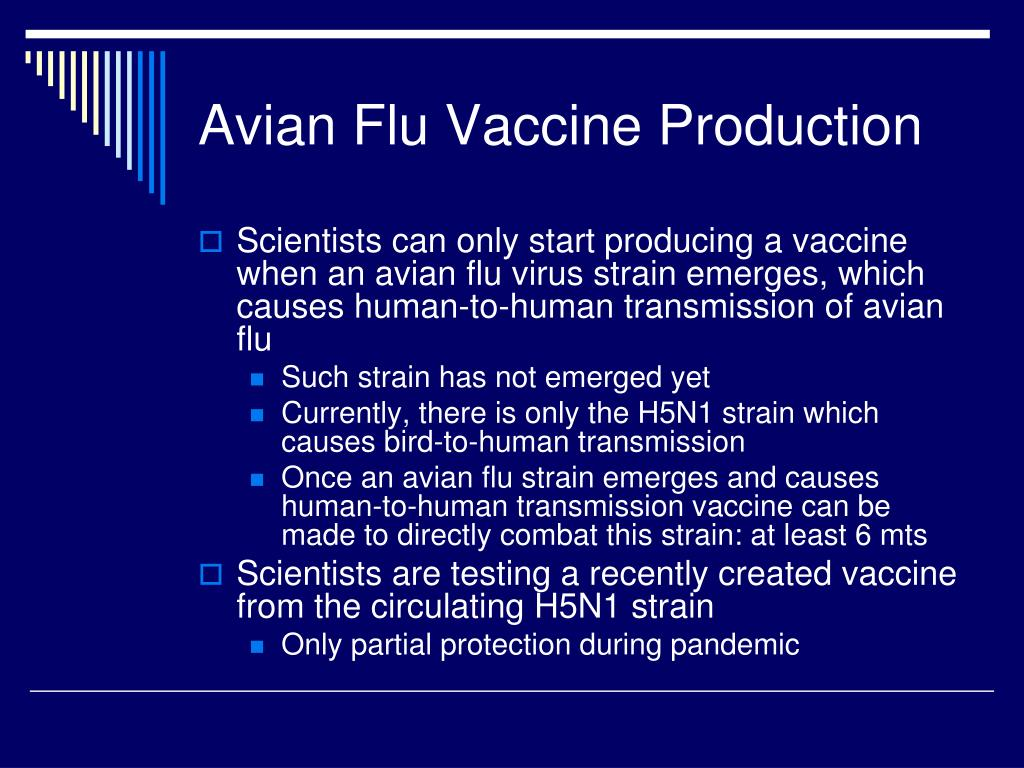 Avian Flu Vaccine Production