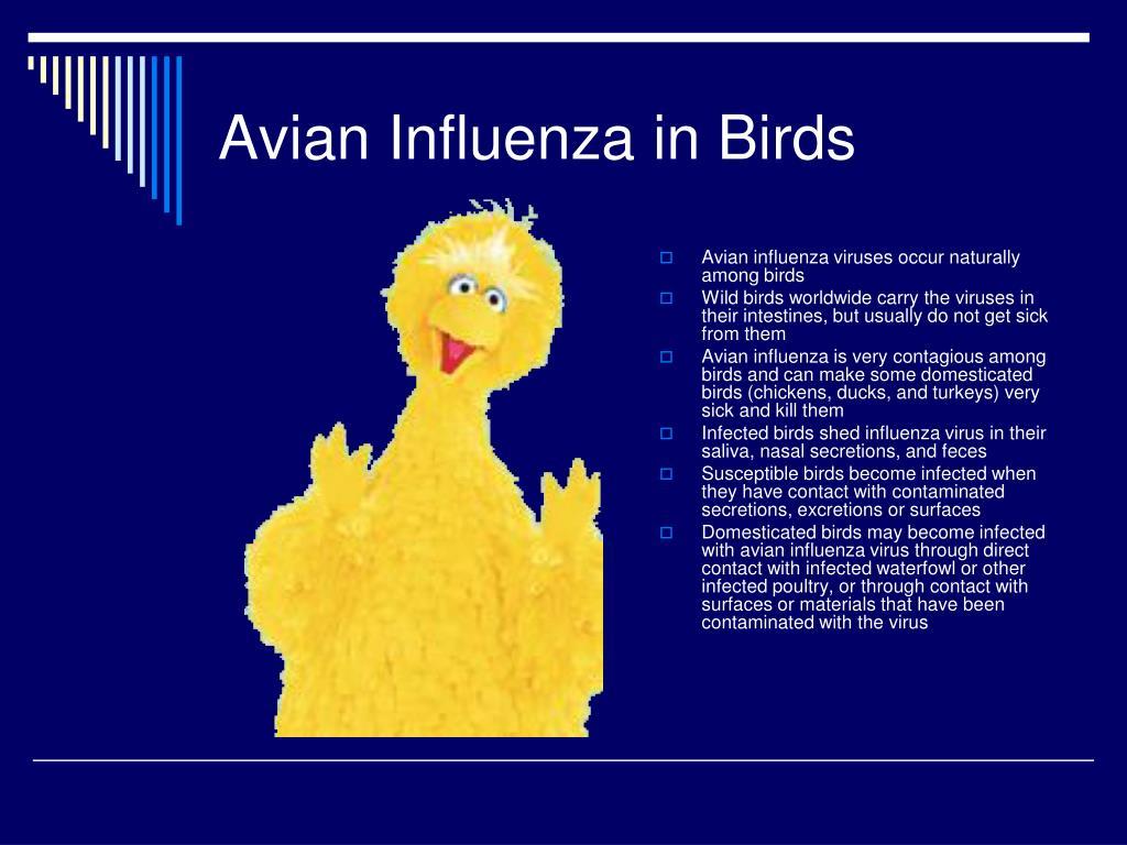 Avian Influenza in Birds