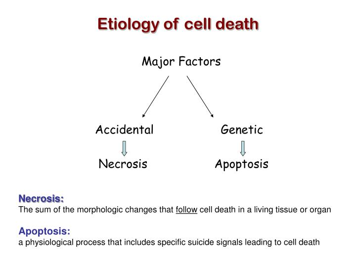 Etiology of cell death