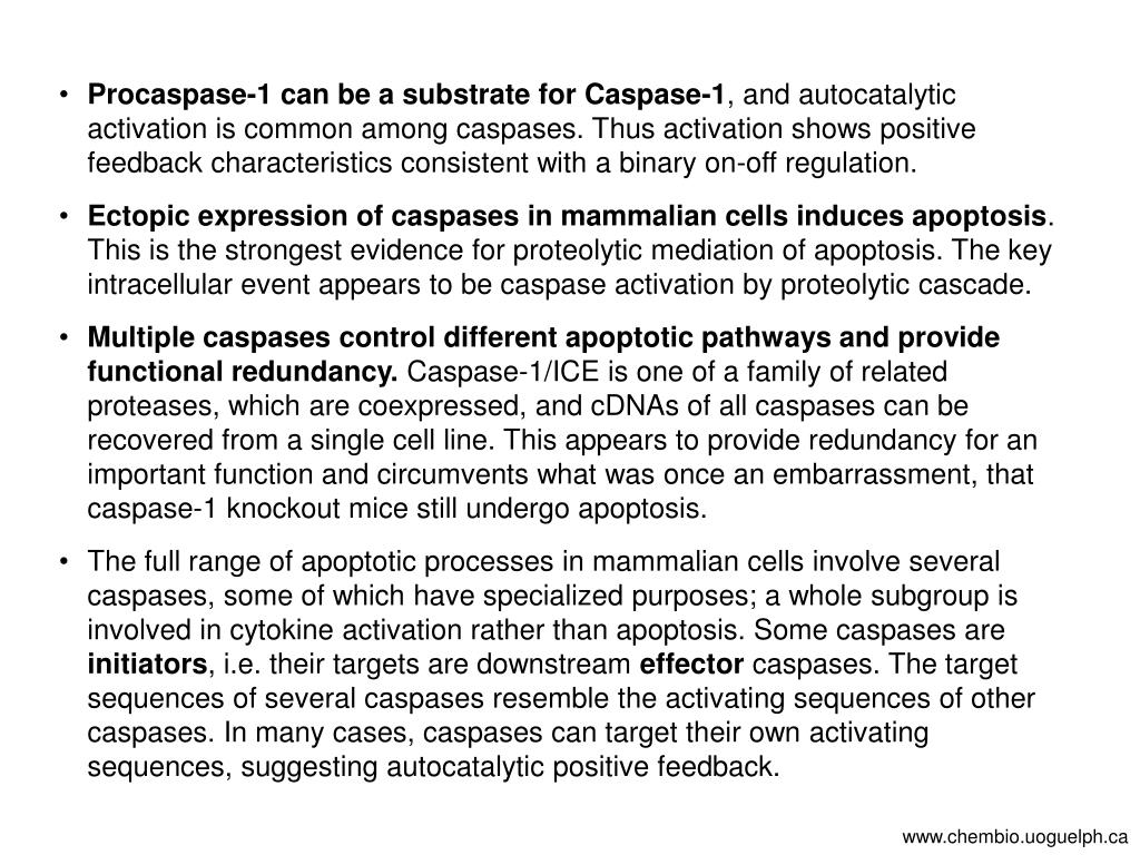 Procaspase-1 can be a substrate for Caspase-1