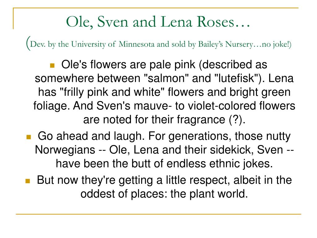 Ole, Sven and Lena Roses…