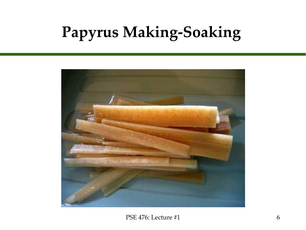 Papyrus Making-Soaking