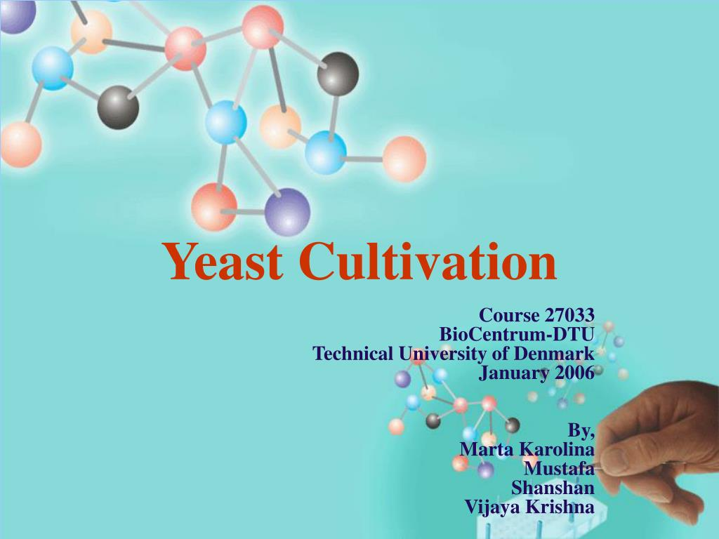 yeast cultivation l.
