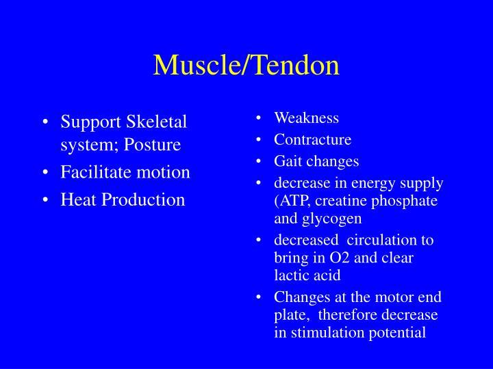 Muscle tendon