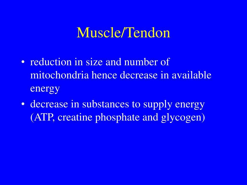 Muscle/Tendon