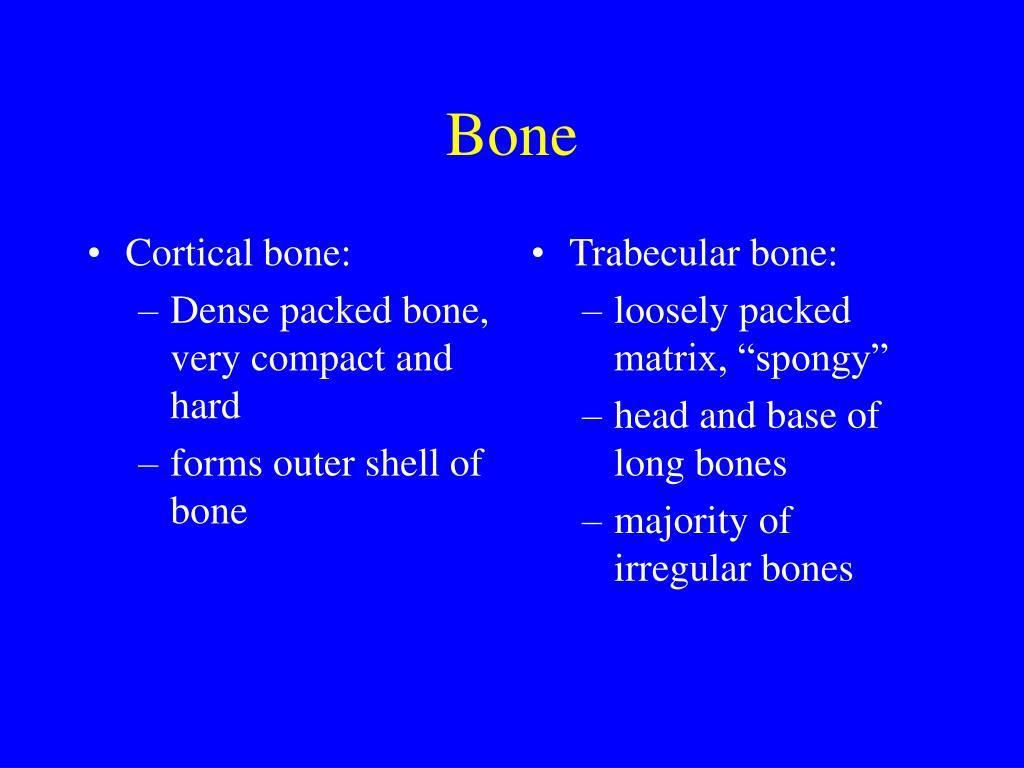 Cortical bone: