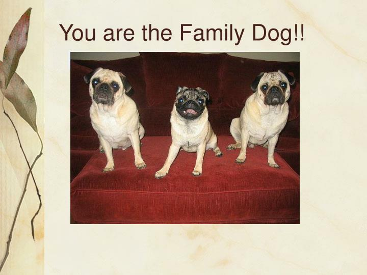 You are the Family Dog!!