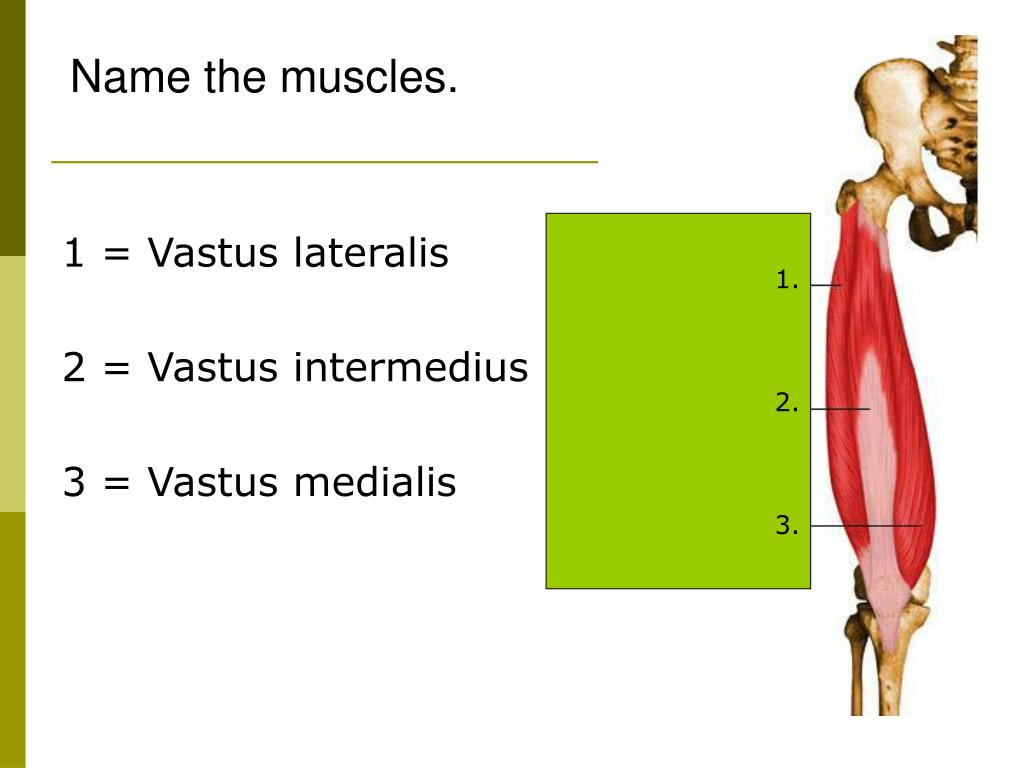 Name the muscles.