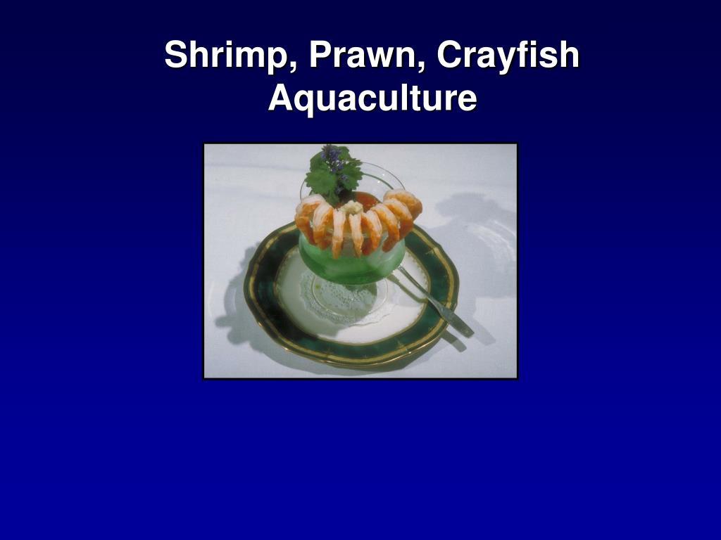 shrimp prawn crayfish aquaculture l.