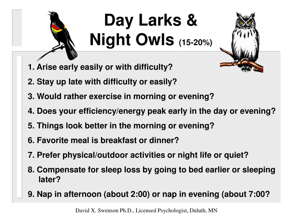 Day Larks &