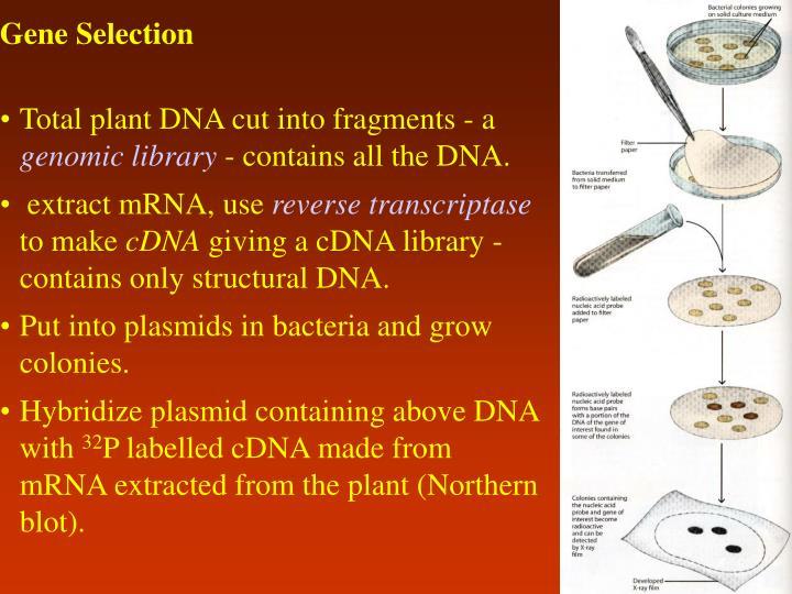 Gene Selection