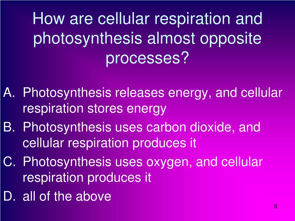 reflection on how photosynthesis is a process The energy in sunlight is introduced into the biosphere by a process known as photosynthesis, which occurs in plants, algae and some types of bacteria.