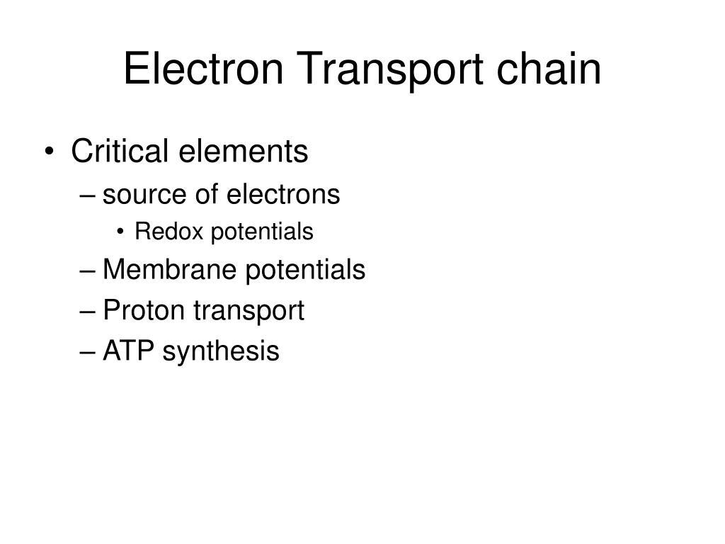 electron transport chain l.