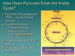 how does pyruvate enter the krebs cycle