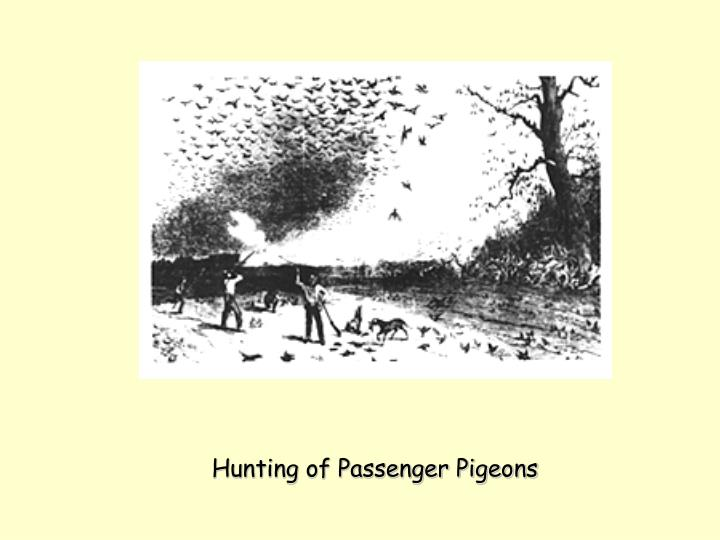 Hunting of Passenger Pigeons